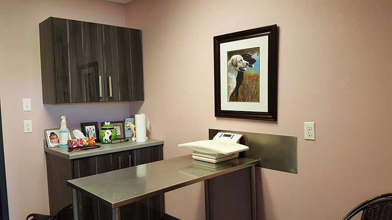 Exam Rooms Tour In New Glasgow Ns East River Animal